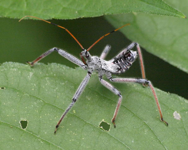 C further P Wheel Bug also F besides B Frnt together with E Cc B. on bug
