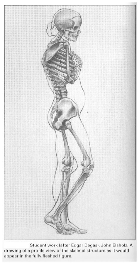How to draw skeletal system