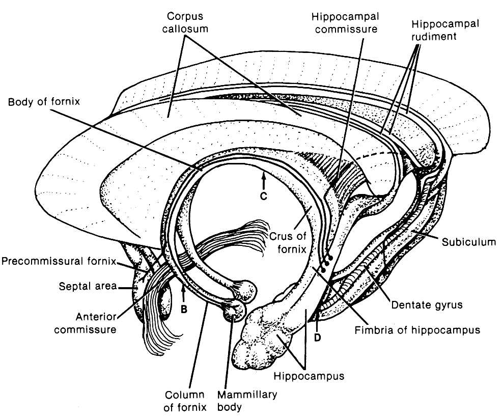 anatomy and physiology coloring pages free - anatomy and physiology coloring pages coloring pages