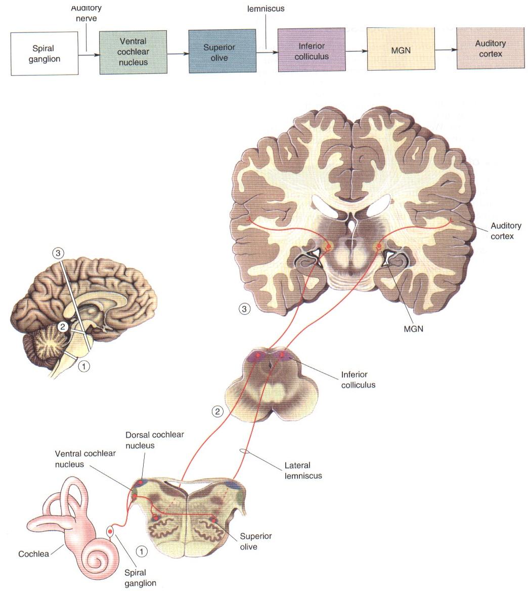 Integrative Neuroscience