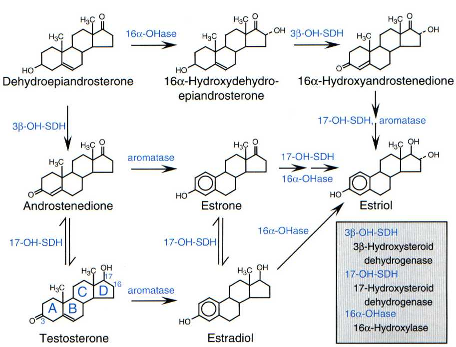 testosterone and turinabol cycle results